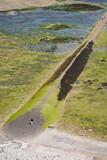 Aerial of people walking a breakwater covered with seaweed. - 222179620