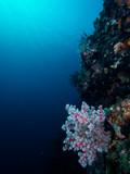 suna and corals