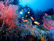 Diver exploring colorful reef