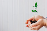 Hands holding small sprout of green plant - 222187654