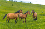 Horses in the steppe. Pets graze in the spring steppe.