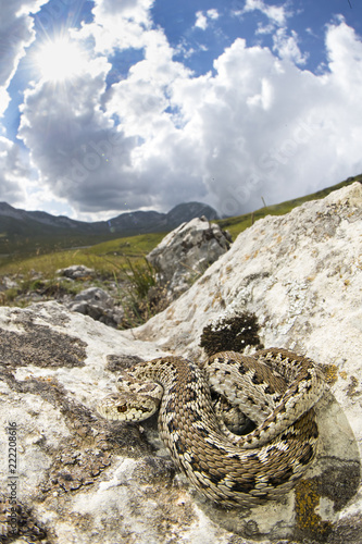 Foto Murales viper