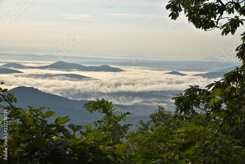 Fototapeta landscape with trees