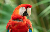 vibrant macaw gives you a stunning profile
