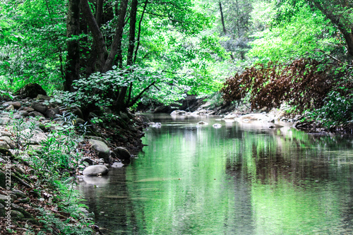 river in the forest with a beautiful reflect © Abdelhakim