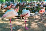 Photo of protected flamingos inside a bird sanctuary.
