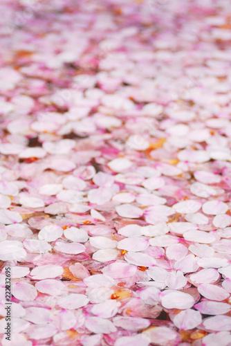 Foto Murales 桜 花びら 水 素材
