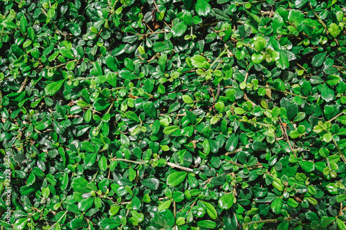 Natural green leaves background with vintage filter  - 222246446