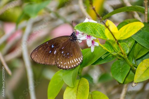 butterfly on flower - 222251061