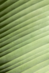 Foglia verde- trama