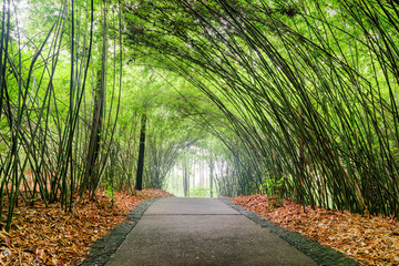 Scenic shady path through bamboo woods. Stone walkway