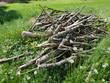Leinwanddruck Bild - Biotop, Holzhaufen