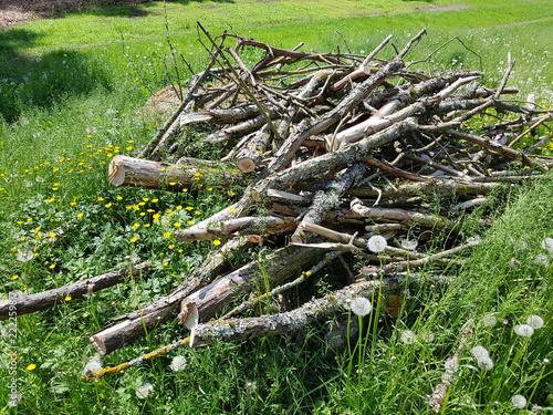Leinwanddruck Bild Biotop, Holzhaufen