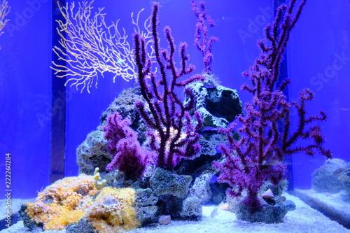 Leinwandbild Motiv colorful seaweed