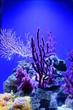 Leinwandbild Motiv pink coral
