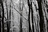 冬の森 - 222261859