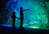 kids-boy and girl- watching fishes in aquarium - 222265285