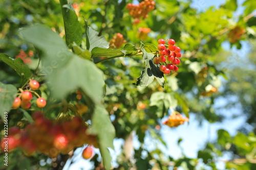 Foto Murales plant