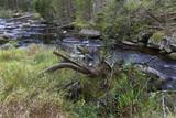 Wild Landscape about Creek Kremelna, Sumava, mountains in south Czech - 222273068