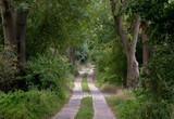 Waldweg / Waldspaziergang - 222277603