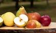 Leinwandbild Motiv Frische Äpfel - Apfelernte