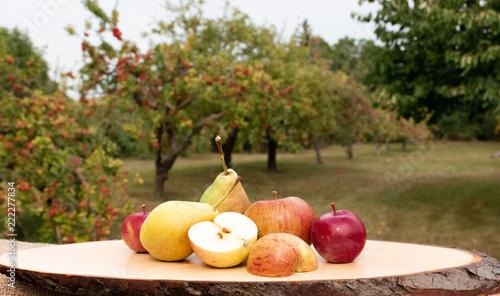 Frische Äpfel - Apfelernte  - 222277834