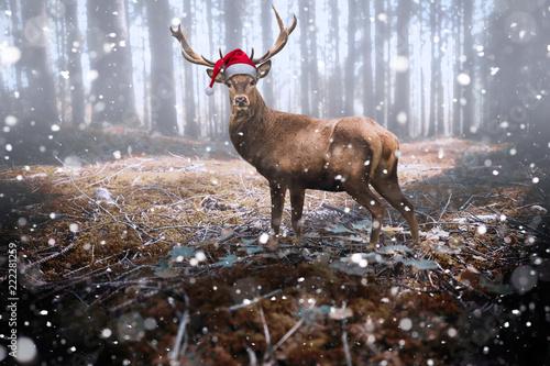Leinwandbild Motiv Rentier mit Nikolausmütze im Schnee