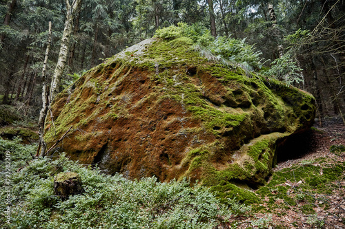 moss on stone and green trees in Bastei, Germany - 222282209