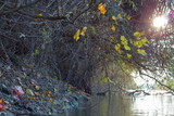 Branch with yellow leaves and bunches of red wild grapes near the river. Autumn landscape - 222296809
