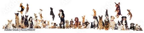 Leinwanddruck Bild set, group of pets