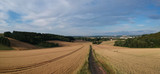 panorama rural summer landscape with a road