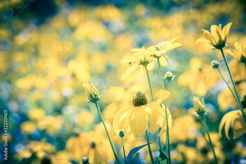 Flowers on summer meadow - 222304611