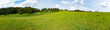 Panorama of a meadow with green grass and trees - 222305294