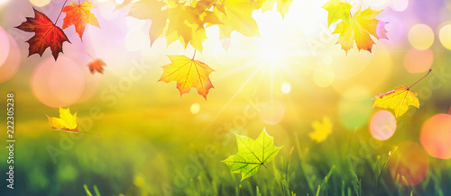 Falling Autumn Maple Leaves Natural Colorful Background. Fall Season