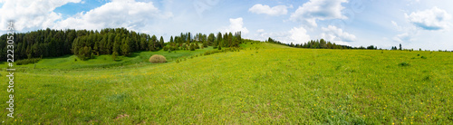 Panorama of a meadow with green grass and trees