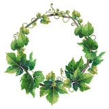 Watercolor wreath made of green grape leaves with curly elements