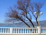 деревья на берегу моря с видом на горы - 222313851