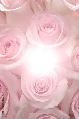 Delikatne różowe róże.