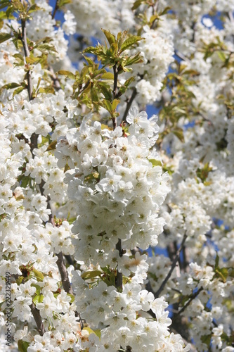 Blumen - 222329449