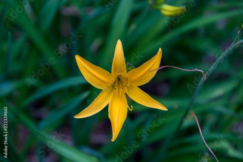 Sticker Yellow flower
