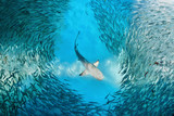 Shark and small fishes in ocean - 222341083