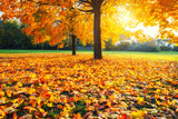 Sunny autumn landscape with golden maple trees in the park - 222343077