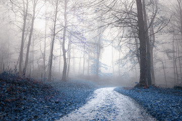 Fantasy saturated foggy forest road. Magic light in the woodland. © robsonphoto