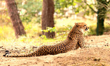 Safaripark - 222361843