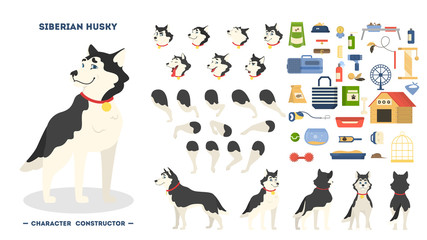 Cute siberian husky dog animation set isolated