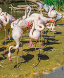 birds paradise big flamingo family and some other birds on the background