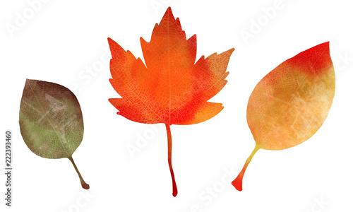 水彩風の秋の落ち葉イラスト Buy Photos Ap Images Detailview
