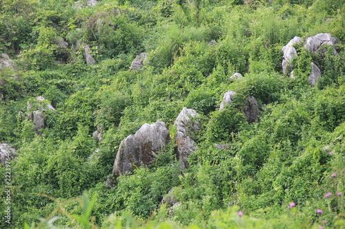 秋吉台の風景(山口県)