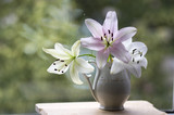 Group of light white and pink lilies in vase, beautiful flowering flowers indoors on the window