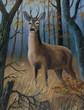 Leinwanddruck Bild - Brauner Hirsch steht im hohen Gras zwischen Bäumen